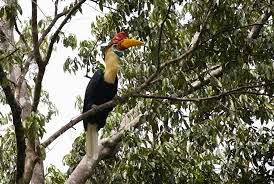 Taman Nasional Lore Lindu (TNLL)