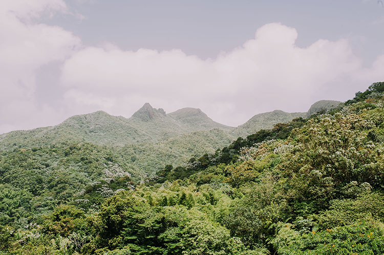 San Juan Puerto Rico Rain Forest