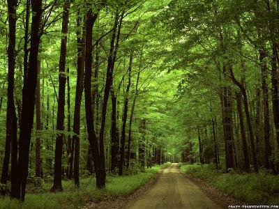 Fondos de Pantalla de Bosque