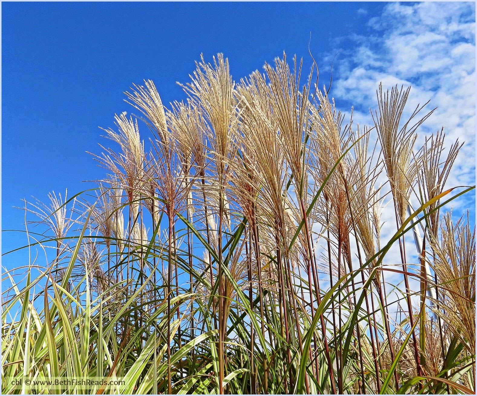 cbl © www.BethFishReads.com