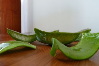 freshly cut aloevera leaves