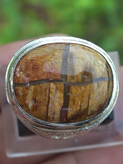 natural petrified wood