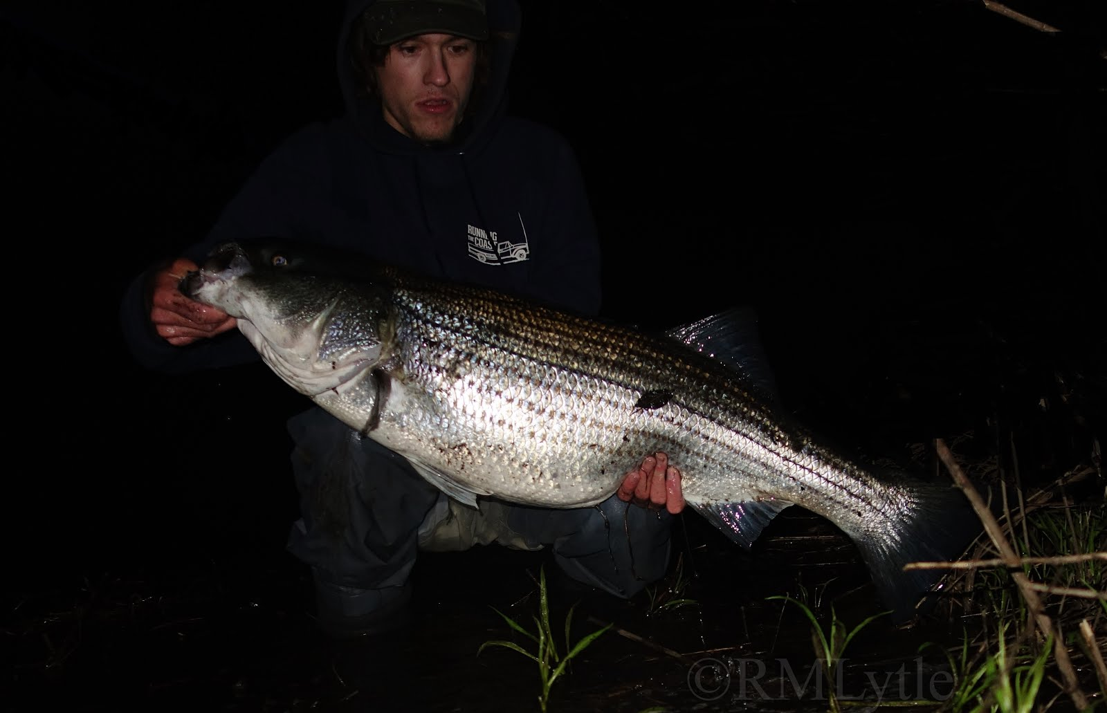 Fish of the Year 2019