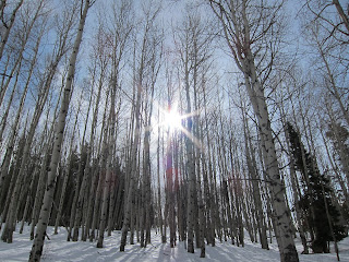 Sun shining through the Aspens in Coyote Glade.