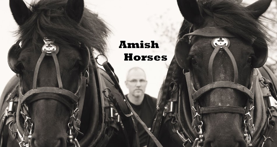 An Amish Gathering Life in Lancaster County by Kathleen Fuller (Paperback 2009)