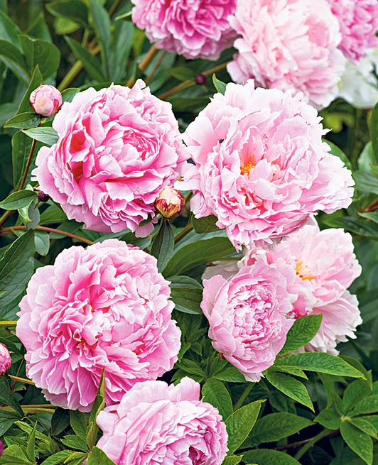 http://www.telegraph.co.uk/gardening/gardenprojects/8624039/Flower-arranging-lessons-from-Chatsworth-House.html