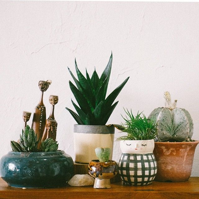 i have this thing with house plants little pots - House Plants
