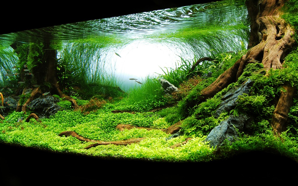 M kemmel akvaryum d zenleme - Gambar aquascape ...