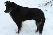Day 31: Black Dog, White Snow