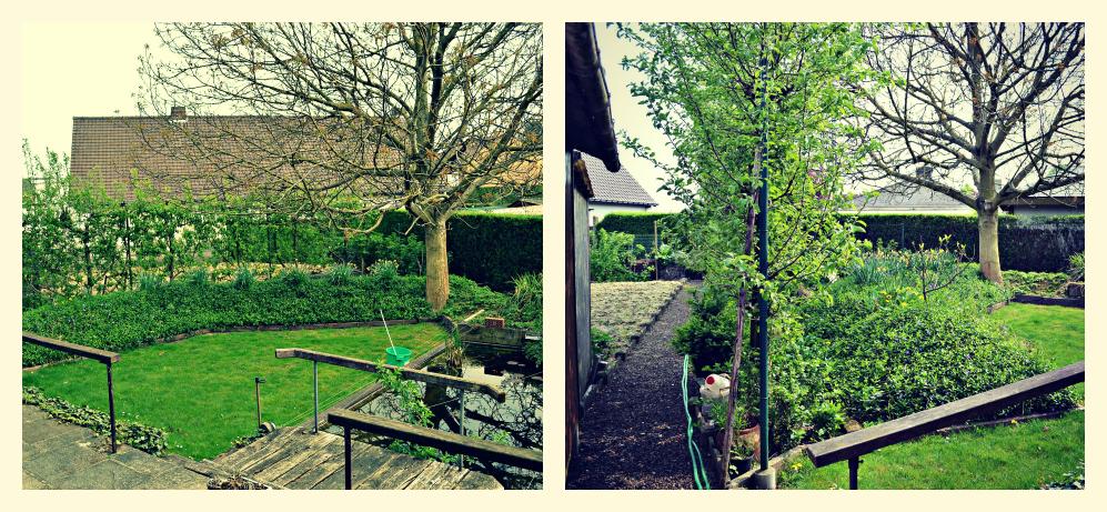 L 39 hobbista notelaar snoeien - Massief idee van tuin ...