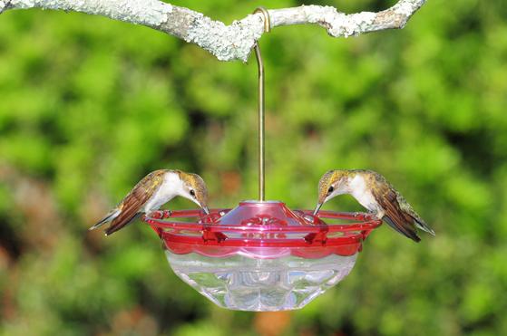 Wild Birds Unlimited: Best small hummingbird feeder