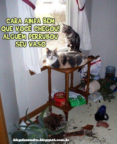 http://3.bp.blogspot.com/-Zr9WX96Ob5E/UCSLBkberhI/AAAAAAABFXc/TY82v0WsxGw/s1600/seuvaso.jpg