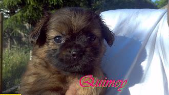 """""""Quimey"""" mi hermoso perrito """"TE AMO"""""""
