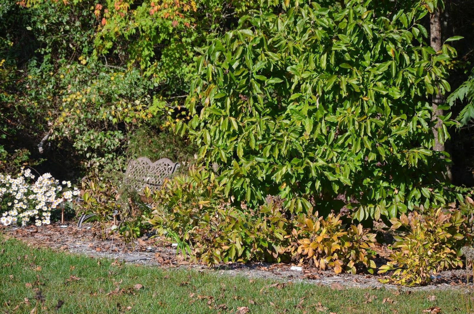 Southern Peony: 2014 Enjoy Fall Peony Foliage Colors