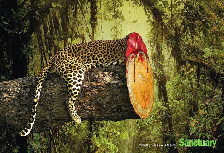 Efek Mengejutkan dari Deforestasi
