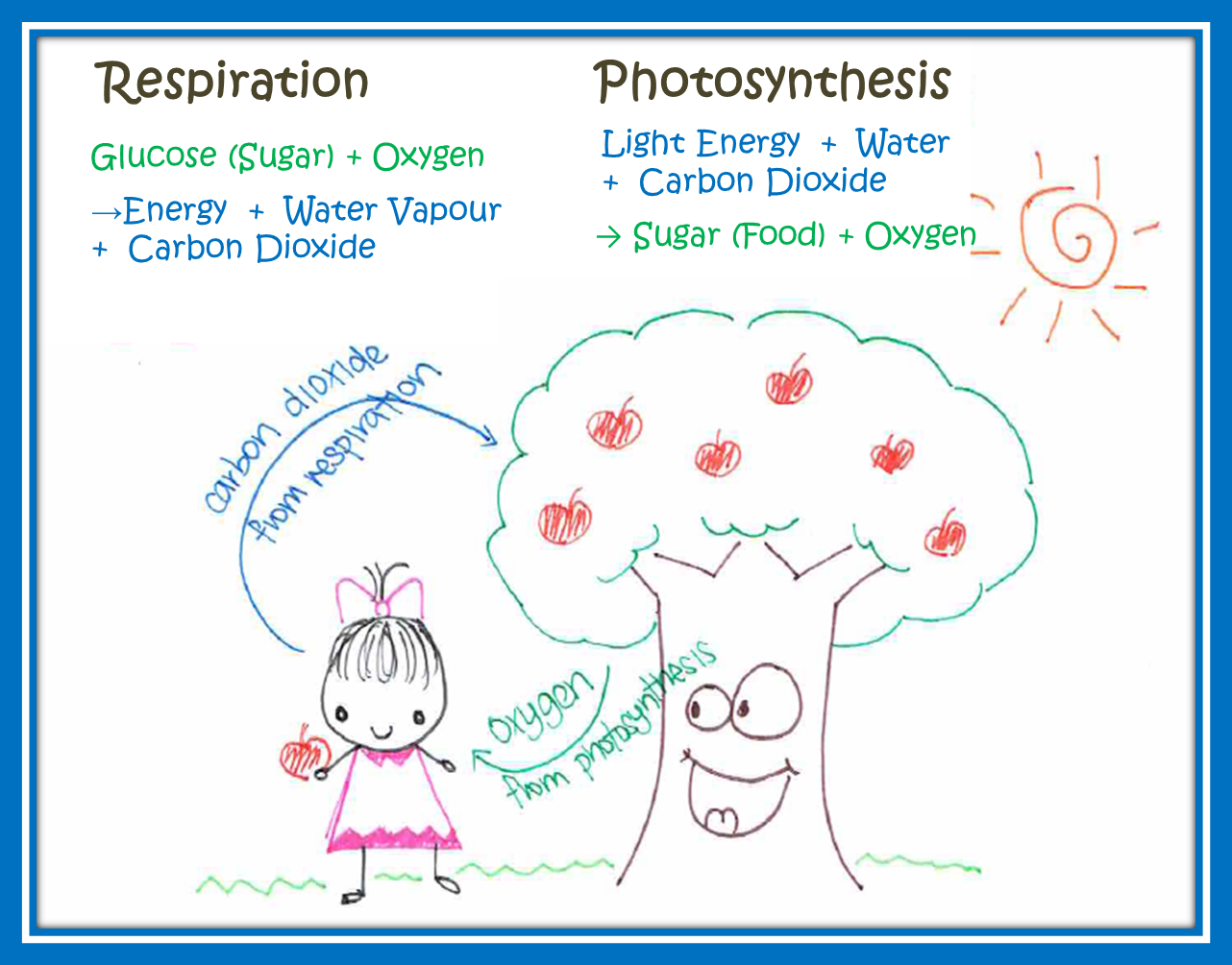 Phtosynthesis and cellular respiration