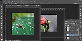 Belajar Edit Photoshop Membuat Hewan Macro Lebih Menarik