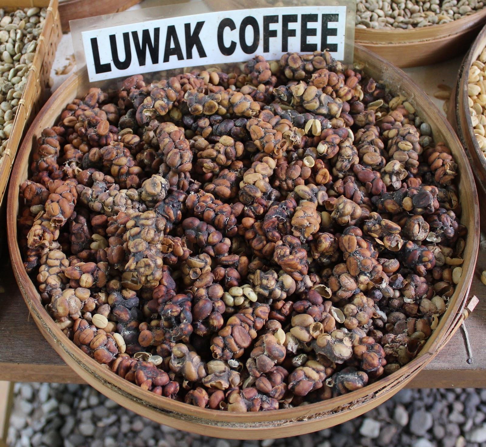 Monkey dung coffee