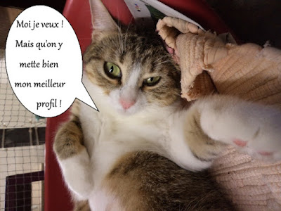 Chatte adorable