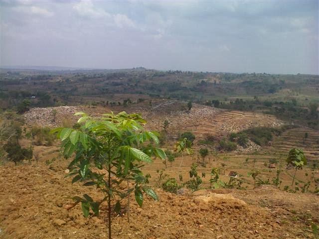 Pemandangan dari atas perbukitan: Bukit bebatuan di Tuban.