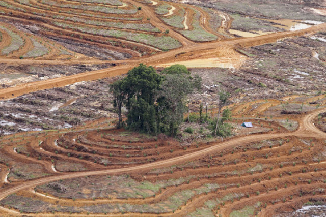 KPK Diminta Tuntaskan Kasus Korupsi Sektor Kehutanan