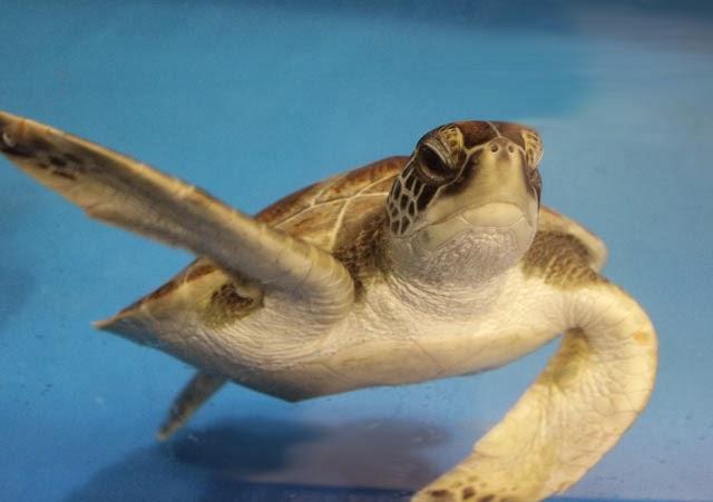 Marine Animal Rescue Team Blog