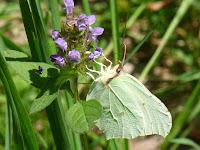ランブイエの森 蝶