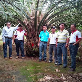 Team Nasa di Perkebunan Sawit