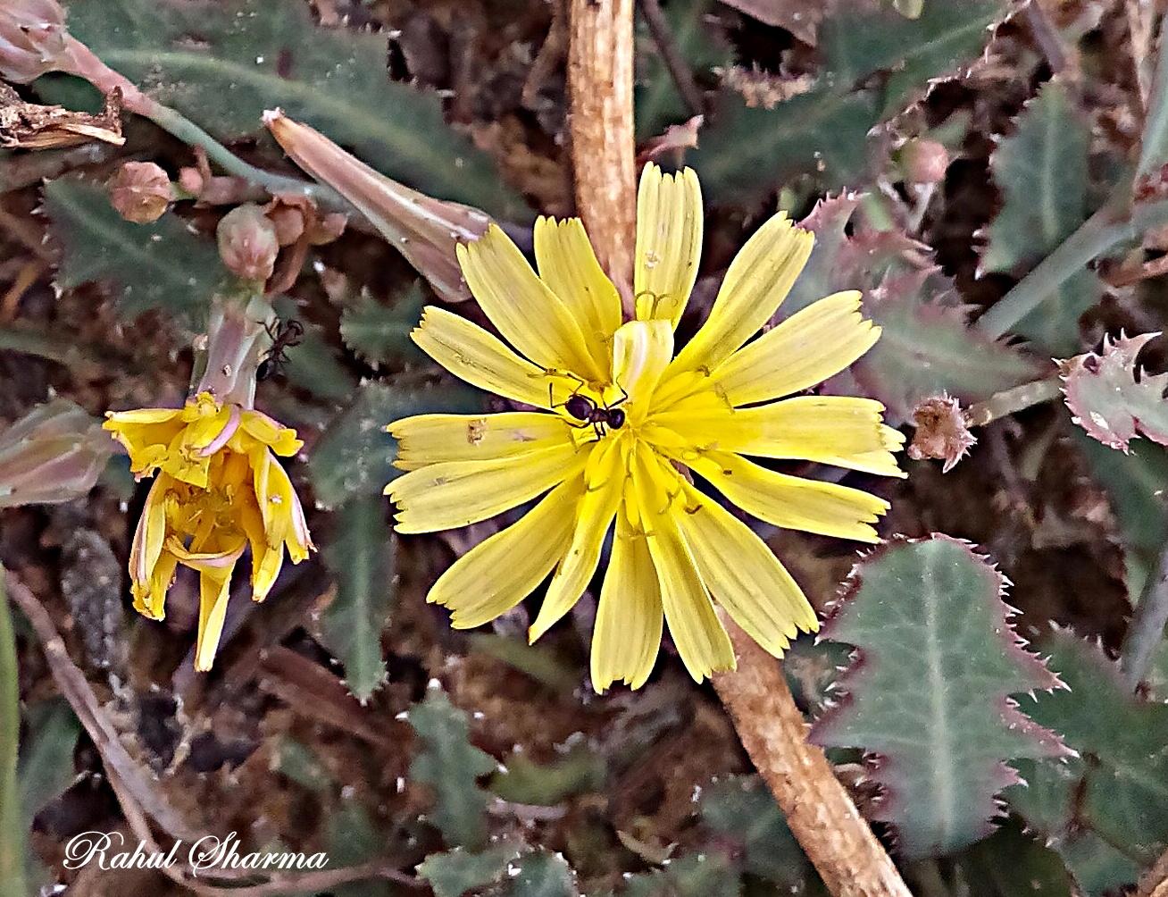 Wild flora of dwarka mightylinksfo