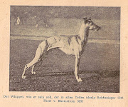 The whippet, as he ought to be the ideal in all parts of the Reich 1941 .