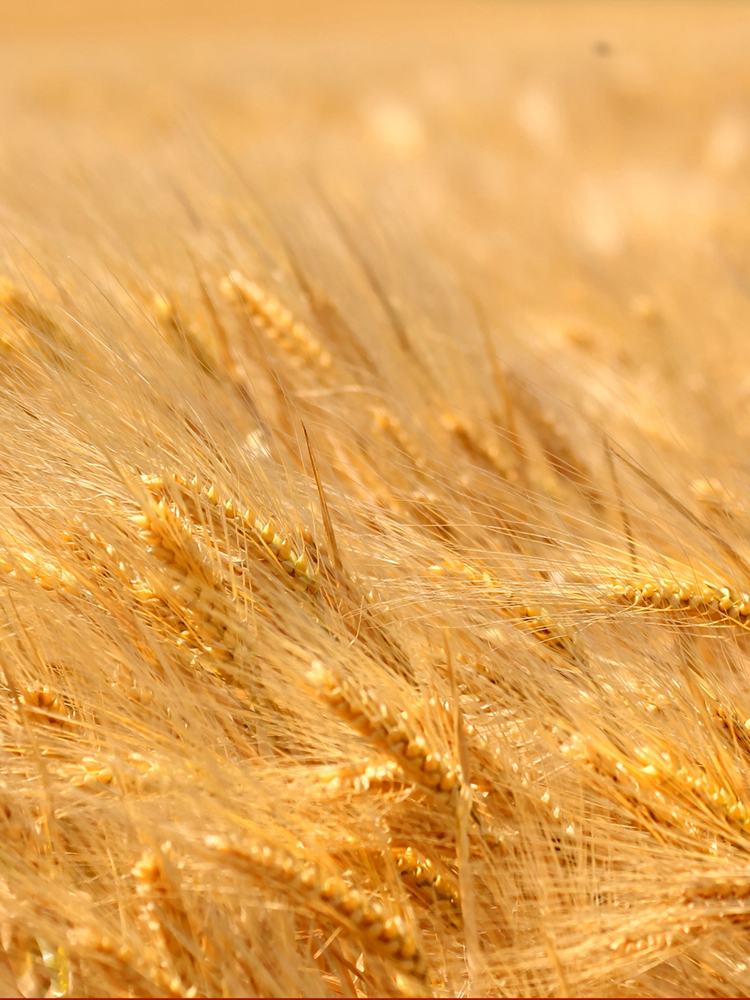 Wheat belly diet hair loss