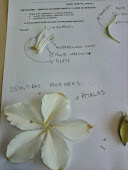 Estudando as flores