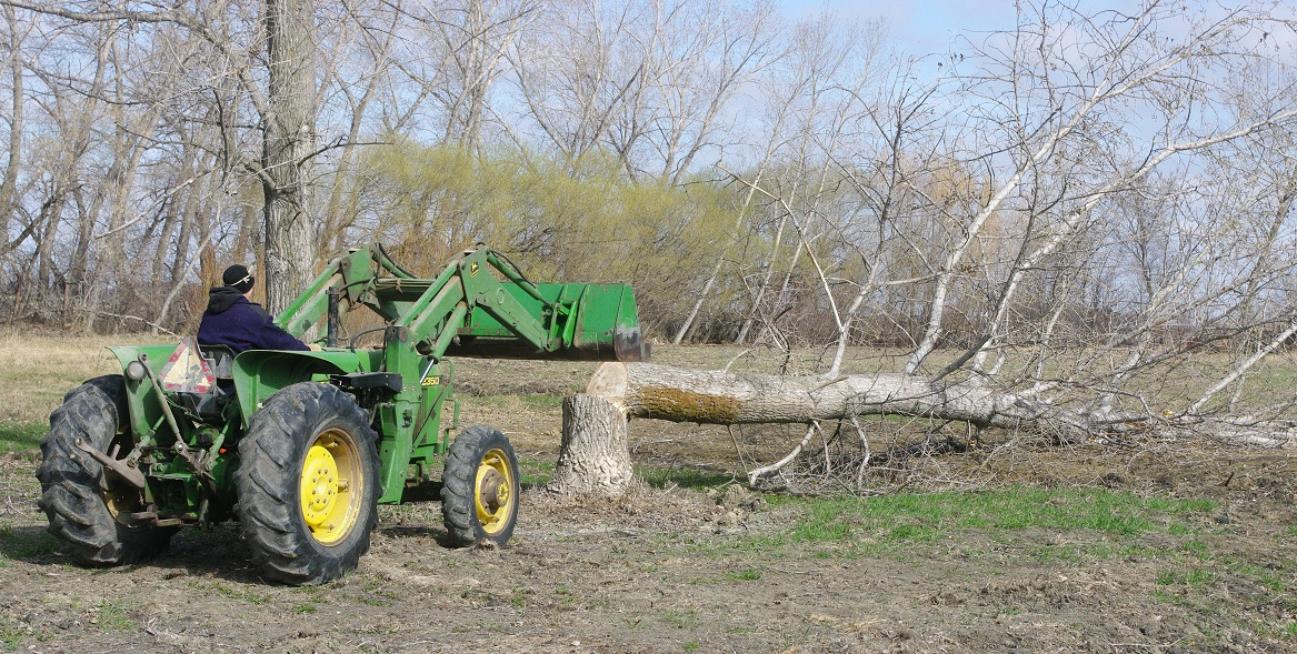 Tractor Man On Cutting Trees : Thousand square feet cutting down more trees to make