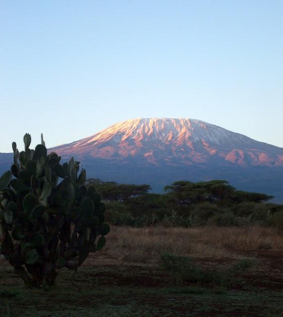 kilimanjaro gazelle harambee