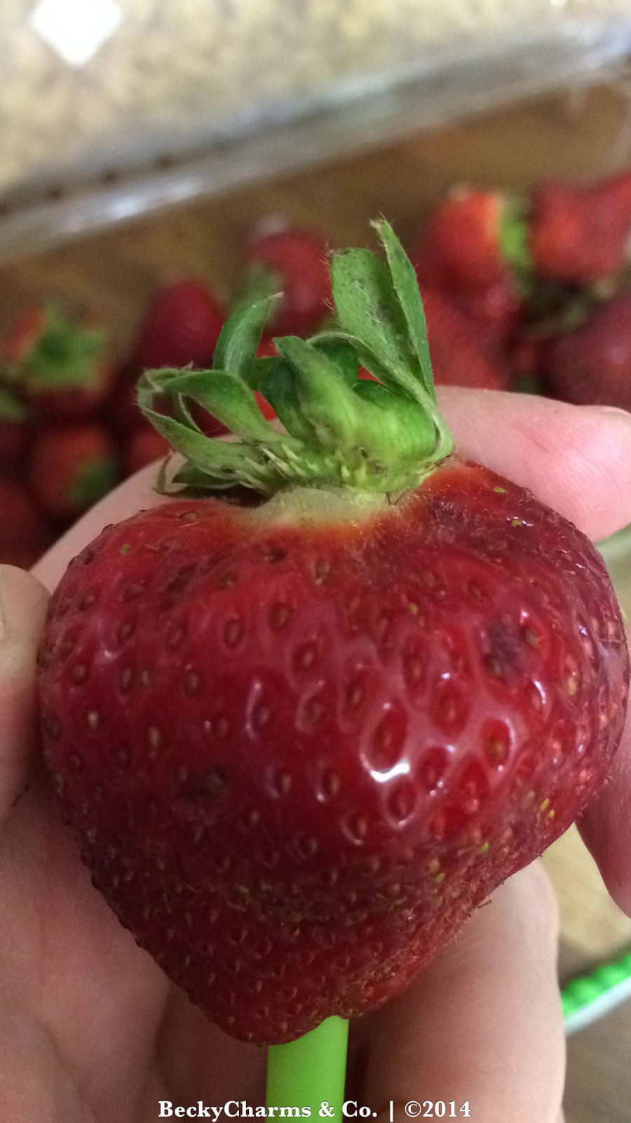 The Perfect Strawberry : Pinterest DIY by BeckyCharms 2014