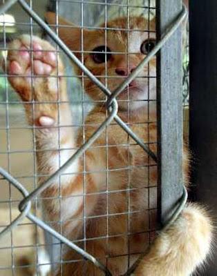 Saturacion de los centros de acogida de animales