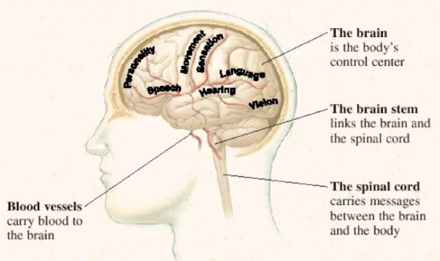 Brain Function Map4