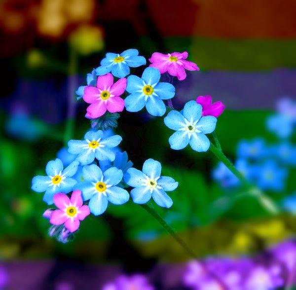 10 loài hoa phụ nữ yêu thích nhất 5