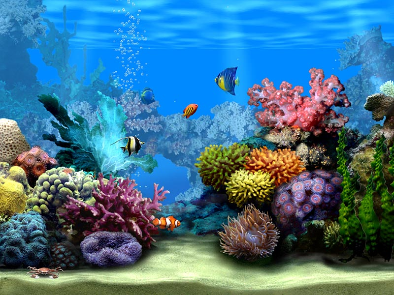 3d hd quality aquarium and support xp vista bothasig