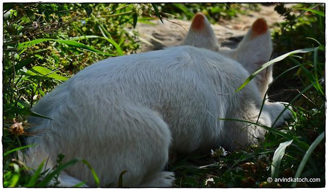 Small dog, dog, Tiny dog, white dog,