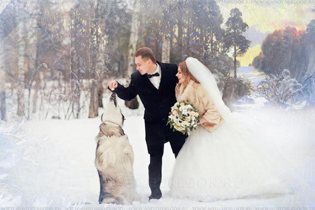 свадьба с собакой фотосессия