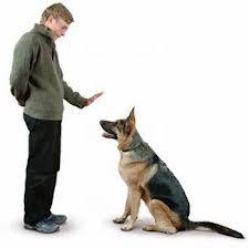 Como hacer que tu perro se siente