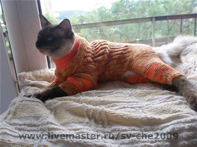 Cat wearing pants  YouTube