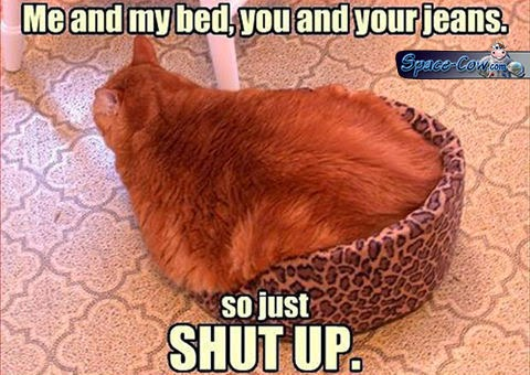 funny fat cat picture