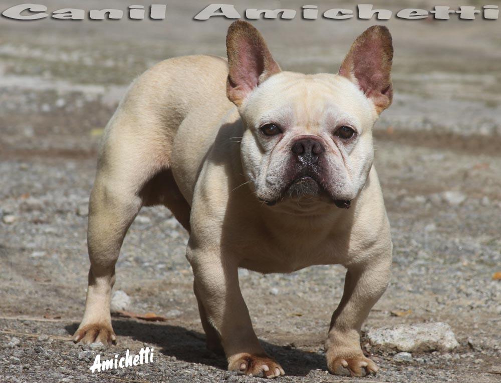O Bulldog Baba Muito