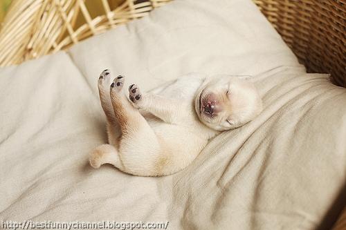 Funny sleeping puppy.