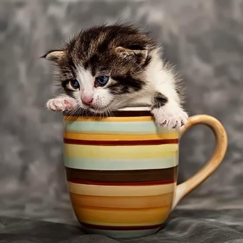 Foto Kucing Kocak