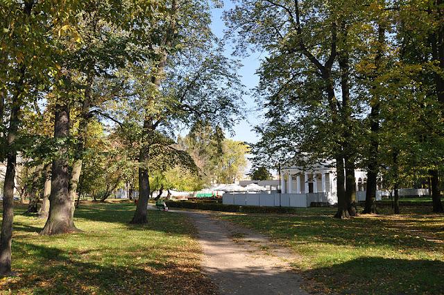 Końskie, aleja parkowa. Zachowane dwie grupy drzew (cztery drzewa o obwodach 2,60 - 2,00 m). Widok od strony zachodniej. Fot. Bartłomiej Woźniak.
