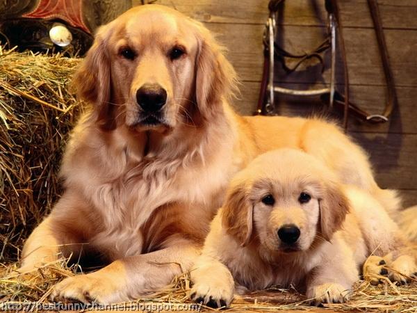 Cute dogs 2