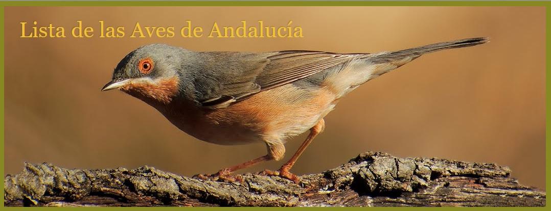 Lista de las Aves de Andalucía